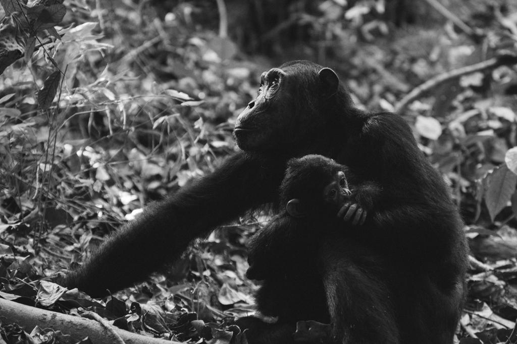 empatía animal